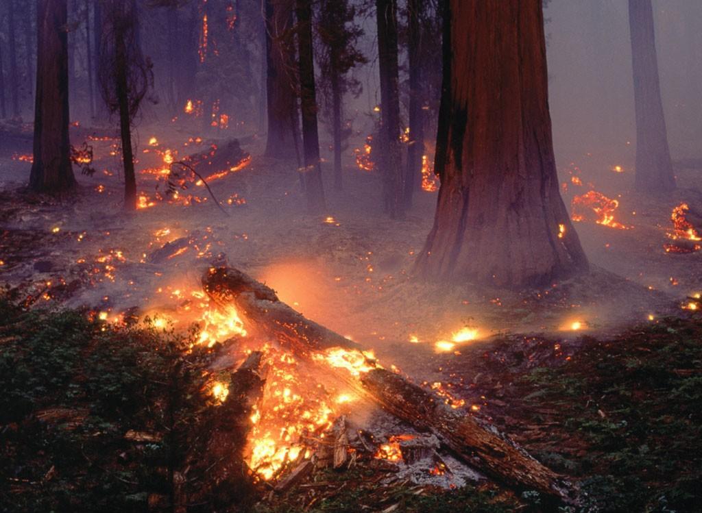 Пожары Скачать Торрент - фото 4
